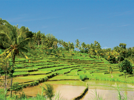 (Image) Indonesie bali rizieres
